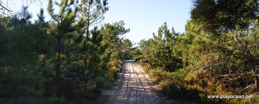 Caminho para a Praia de Vale Pardo