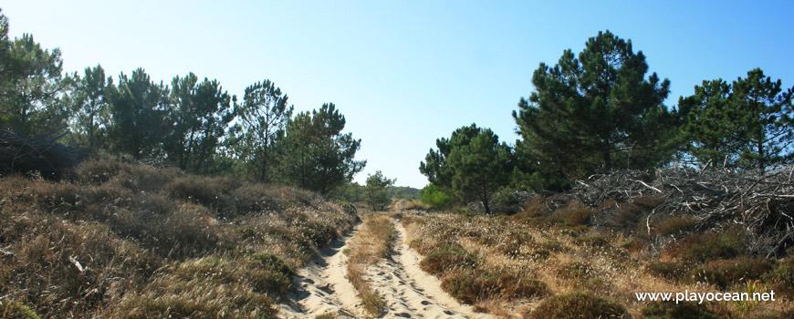 Caminho para a Praia das Dunas de São Jacinto