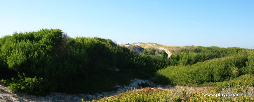Natural Dune Reserve of São Jacinto