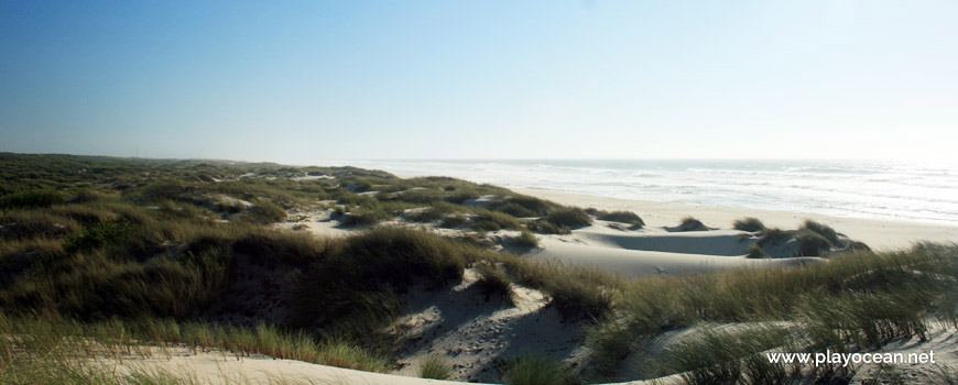 Dunas na Praia das Dunas de São Jacinto