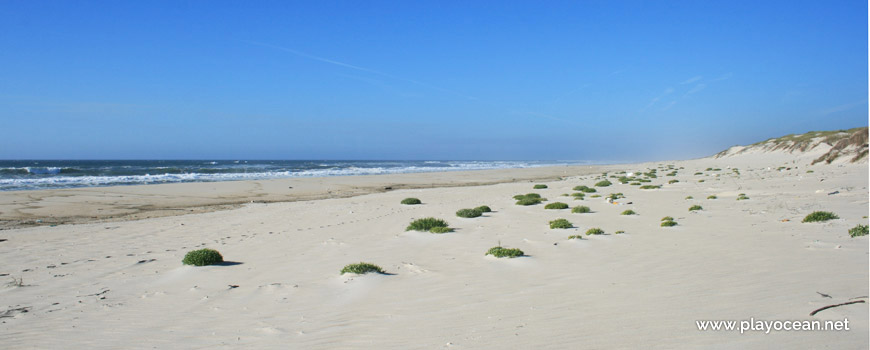Areal, Praia das Dunas de São Jacinto