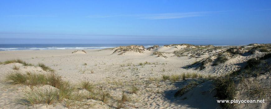 Dunes of Praia de São Jacinto Beach