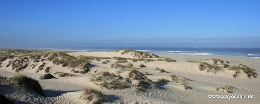 Dune at Praia de São Jacinto Beach