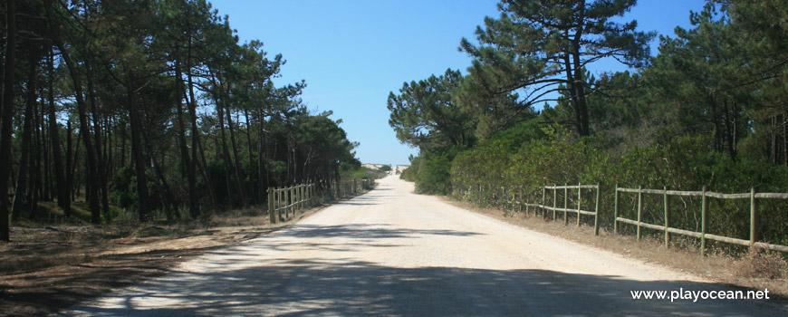Caminho para a Praia do Palheirão