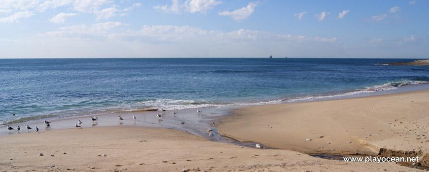 Gaivotas na Praia da Parede