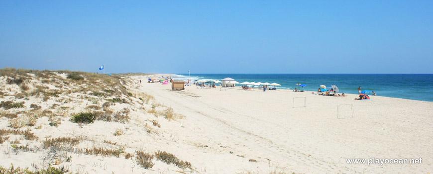 Este na Praia da Culatra (Mar)