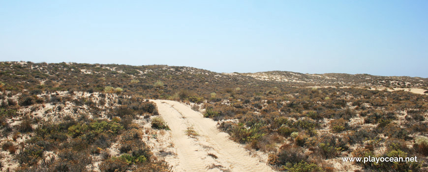 Path on the dunes of Praia da Culatra (Sea) Beach