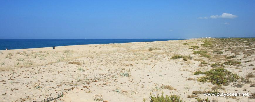Sistema dunar da Praia de Faro (Este)