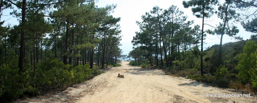 Floresta de acesso à Praia do Pinheirinho