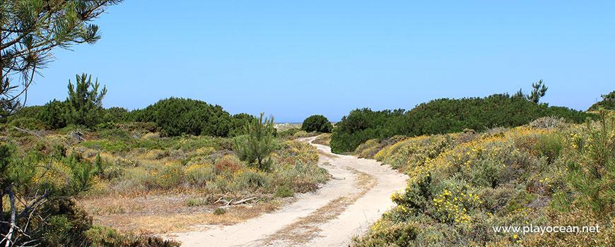 Caminho para a Praia da Sesmaria