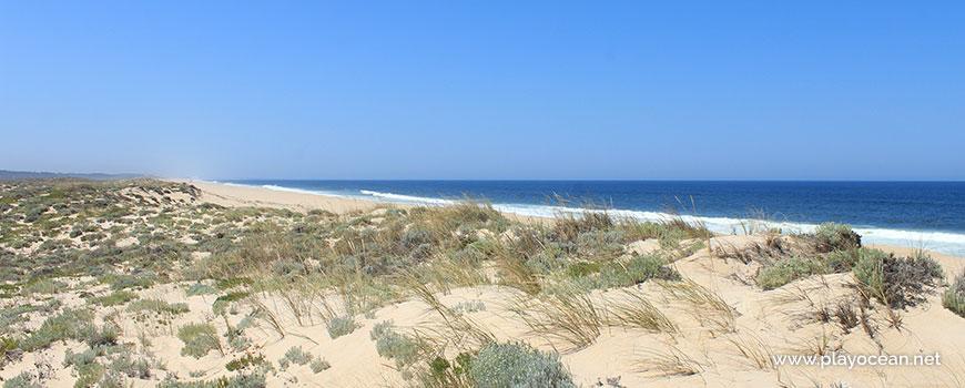 Vegetação na Praia da Sesmaria