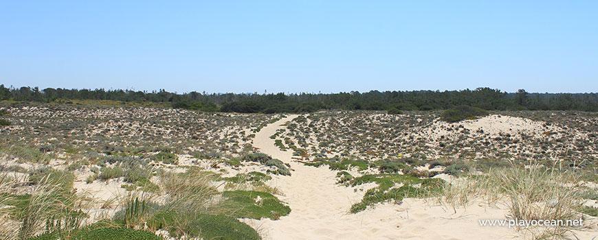 Mata na Praia da Sesmaria