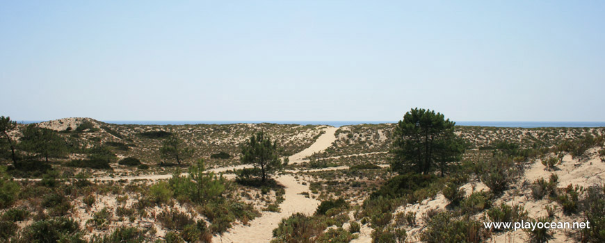 Dunes of Praia da Torre Beach