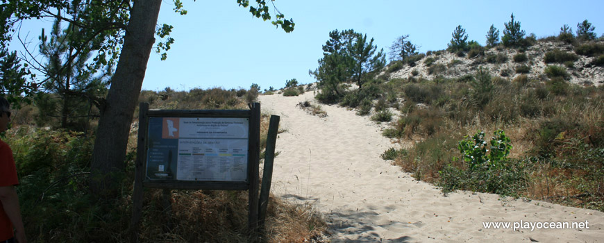 Beginning of dune at Praia da Torre Beach