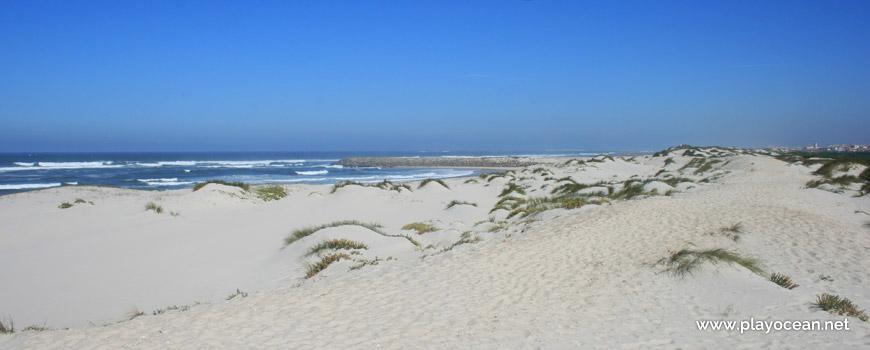 Dunas da Praia da Costinha