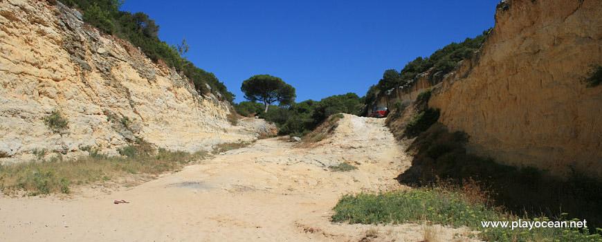 Pinewood at Praia do Barranquinho Beach