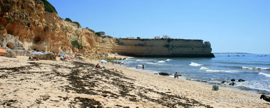 Sargasso at Praia Nova Beach