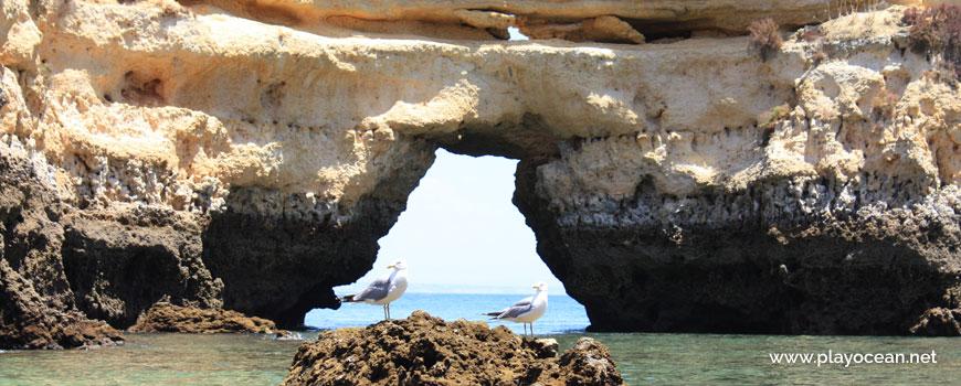 Seagulls at Praia da Boneca Beach