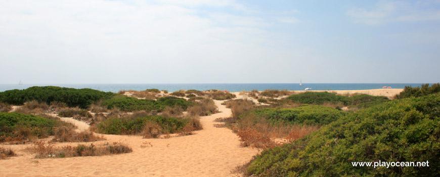 Trilho na Praia do Trafal