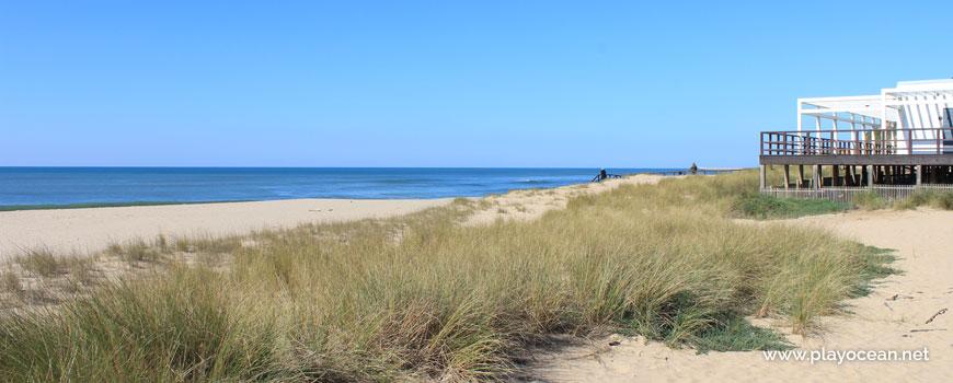 Vegetation on dunes