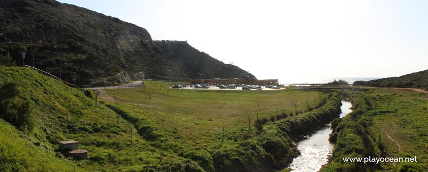 Vegetation at Praia de Ribeira dIlhas Beach