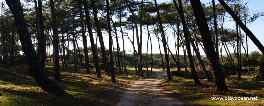 Path to Praia do Samouco Beach