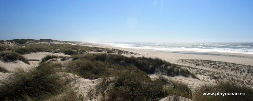 Dunas na Praia da Colónia de Férias