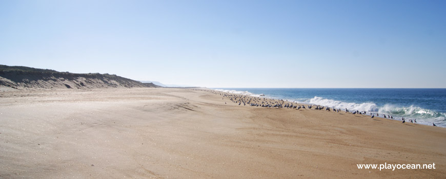 South at Praia da Entrada do Porto Beach