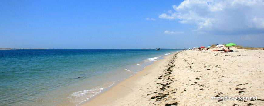 Oeste na Praia da Armona (Mar)