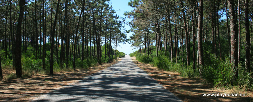 Estrada para a Praia de Torrão do Lameiro