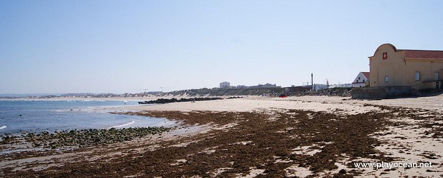 Seaweed at Gâmboa Beach