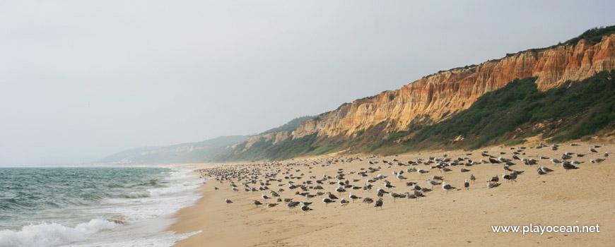 Gaivotas Praia dos Medos de Albufeira