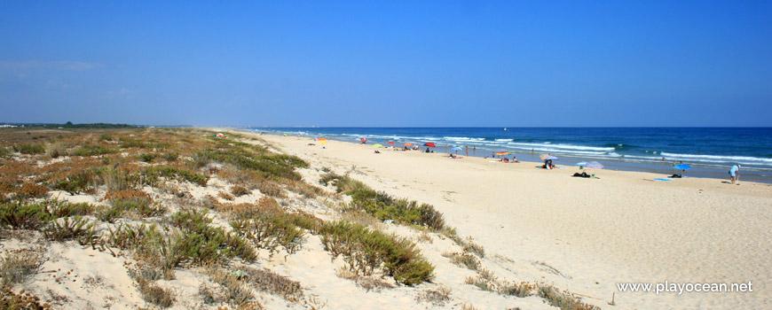 Este na Praia da Terra Estreita