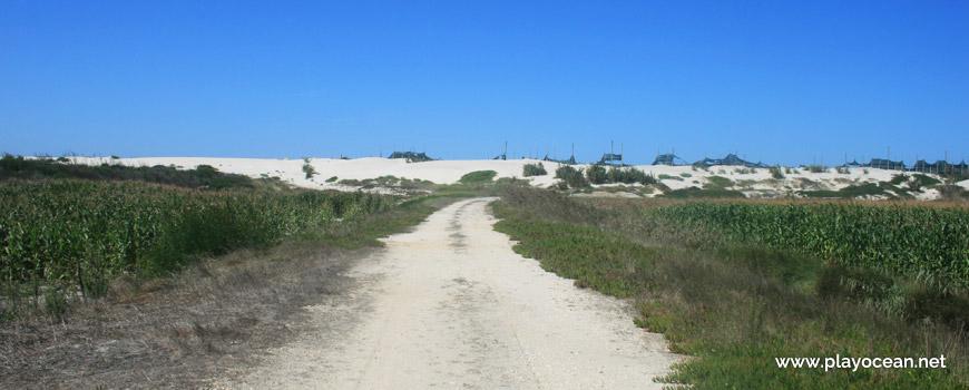 Caminho para a Praia da Gafanha da Boa Hora