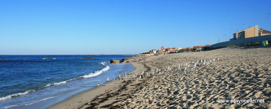 Seagulls at Praia de Vila Chã Beach